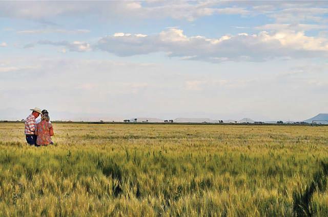 A Colorado hops farm in the San Luis Valley