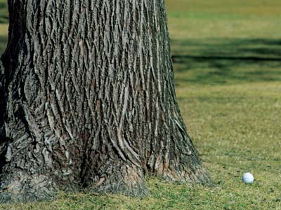 The dreaded tree lie for a right-hander