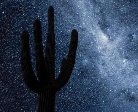 Saguaro in Arizona at night