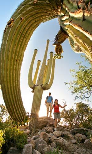 Hiking among the saguaros